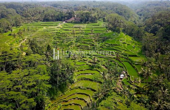 UBUD – Stunning land in Manik Tawang / Tampak Siring for long lease (LHL002)